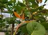 대구수목원 - 열대과일원에 공기정화식물 휘귀종 새가 날개를 핀 모양과 비슷한 극락조화,꽃,유래,전설.