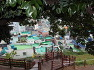 통영 가볼만한 곳- 통영 서피랑 후박나무