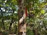 [전북 정읍여행] 산울림산악회 제84차 정기산행은 정읍 구절초 테마공원에 하얀 꽃향기 품어가는 제14회 정읍 구절초 꽃축제 2019, 종석산 산행.