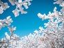 겨울철 가장 아름다운 꽃은 눈꽃, 덕유산 눈꽃 여행