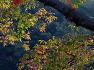 고성 가볼만한 곳-고성 범계마을 느티나무